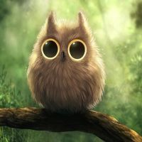 Cute_Owl-wallpaper-10609673