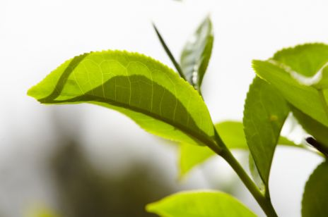 Herbata w rytmie natury
