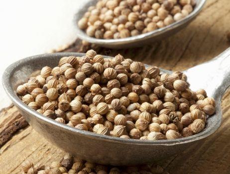 nasiona-kolendry